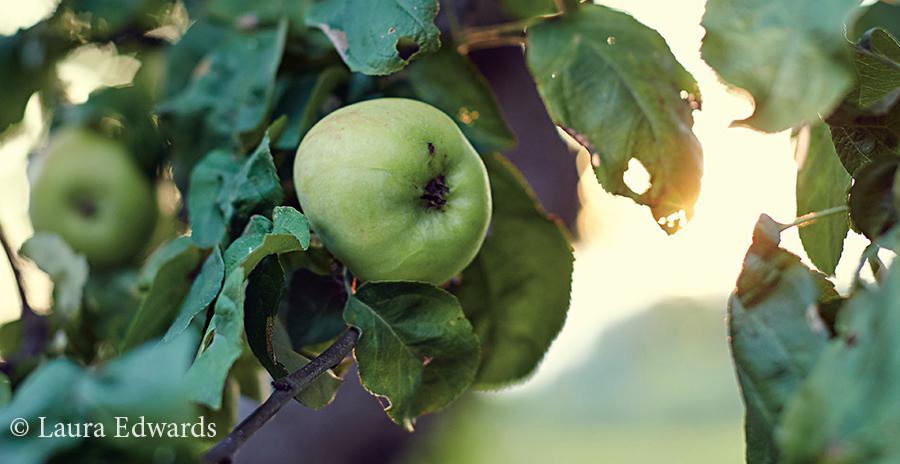 Eating Seasonally: Autumnal Apples